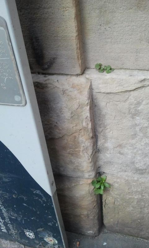 Cultivo hidroponico?
