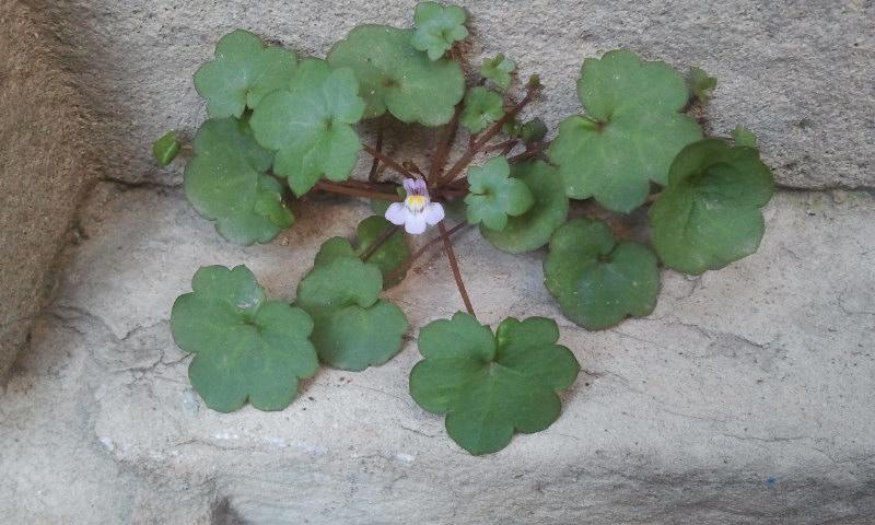 Florece de cerca