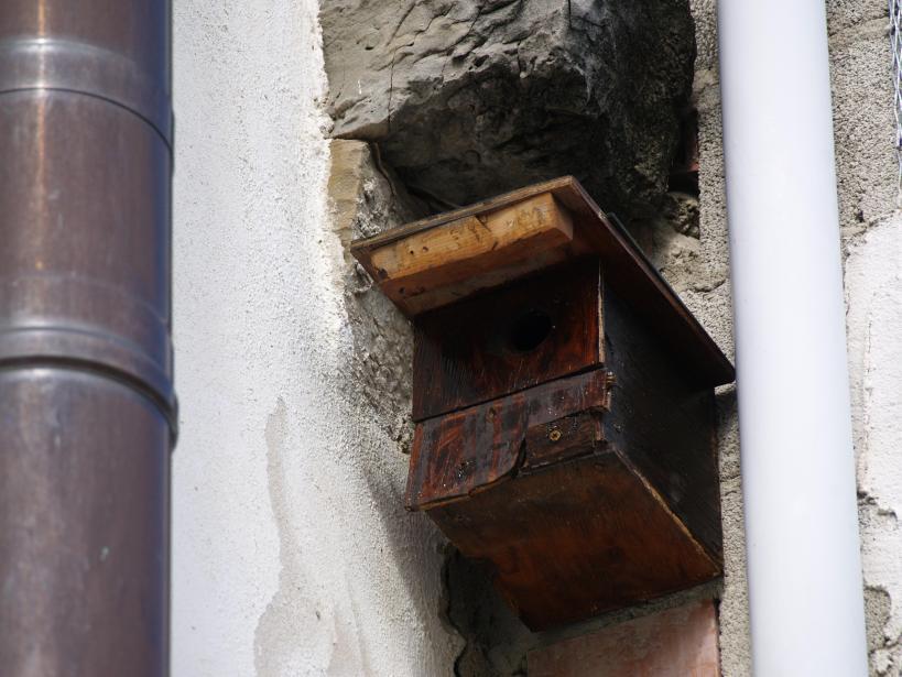 27 de Abril de 2014  Mi segunda caja nido , 30 años después, en el Patio Viviente