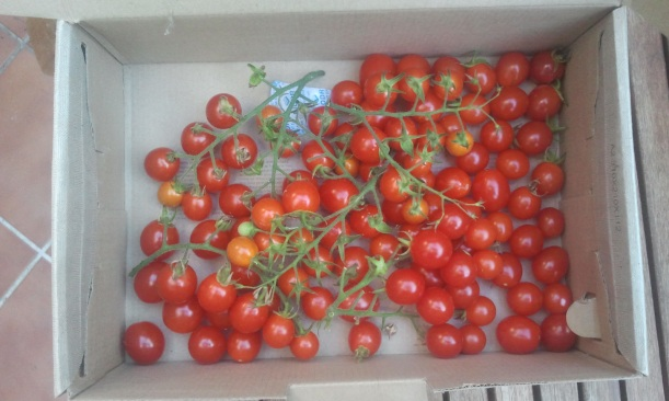 Tomates Cherry. Huerto del Patio Viviente. 27 agosto 2014