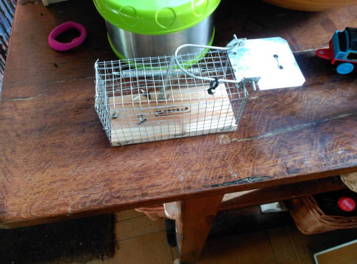 Trampa para coger ratón vivo. Patio viviente. 12 de Mayo de 2015